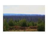 Леса молодые и горельники... Фотограф: vikirin  Просмотров: 1863 Комментариев: 0