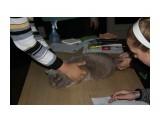 Название: Зевс Фотоальбом: выставка кошек 29.11.2009 Категория: Животные  Время съемки/редактирования: 2009:11:29 16:52:51 Фотокамера: Canon - Canon EOS 1000D Диафрагма: f/5.6 Выдержка: 1/60 Фокусное расстояние: 55/1 Светочуствительность: 400   Просмотров: 513 Комментариев: 0