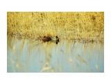 DSC06376_новый размер Фотограф: В.Дейкин  Просмотров: 781 Комментариев: 0
