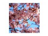 Название: BE4DB48A-2992-4B5F-A143-618AFB071C90 Фотоальбом: Цветы Категория: Природа  Время съемки/редактирования: 2021:05:18 18:07:12 Фотокамера: OLYMPUS IMAGING CORP.   - E-M1             Диафрагма: f/5.1 Выдержка: 1/320 Фокусное расстояние: 94/1    Просмотров: 128 Комментариев: 0