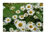 И все эти цветы, для Тебя!!!!! Фотограф: viktorb  Просмотров: 797 Комментариев: 0