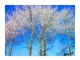Деревья Фотограф: alexei1903  Просмотров: 205 Комментариев: 0