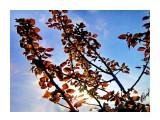 деревья Фотограф: alexei1903  Просмотров: 1176 Комментариев: 0