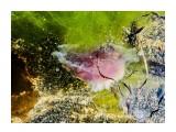 Название: 2017-08-22 16.00.50 Фотоальбом: Цветы моря Категория: Море  Время съемки/редактирования: 2017:08:22 16:00:50 Фотокамера: Apple - iPhone 6s Диафрагма: f/2.2 Выдержка: 1/447 Фокусное расстояние: 83/20    Просмотров: 492 Комментариев: 0