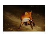 На охоте Фотограф: В.Дейкин  Просмотров: 921 Комментариев: 1