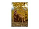 Название: _MG_2958 Фотоальбом: Мои собаки Категория: Животные Фотограф: Светличная Наталья  Просмотров: 1024 Комментариев: 0