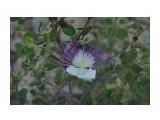 аленький цветок Фотограф: NIK  Просмотров: 327 Комментариев: 0
