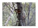 Название: Древесные грибы. Фотоальбом: Грибы 2014г. Категория: Природа  Просмотров: 340 Комментариев: 0