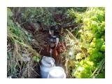 Раскопали ручешко... чистая водичка с вершин сопки.. родничок.. или соки деревьев...  Фотограф: vikirin  Просмотров: 3194 Комментариев: 0