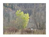 Название: Краски осени Фотоальбом: Природа 2018г Категория: Природа  Время съемки/редактирования: 2018:10:21 15:15:35 Фотокамера: OLYMPUS IMAGING CORP.   - SP570UZ                 Диафрагма: f/4.3 Выдержка: 10/1600 Фокусное расстояние: 3166/100    Просмотров: 515 Комментариев: 0
