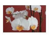 """Название: IMG_3665 Фотоальбом: Мои красотки """"Орхидеи"""" Категория: Цветы  Время съемки/редактирования: 2013:05:03 13:14:57 Фотокамера: Canon - Canon EOS 550D Диафрагма: f/10.0 Выдержка: 1/200 Фокусное расстояние: 36/1    Просмотров: 396 Комментариев: 0"""