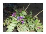 Название: Веночек Ночь на 7июля Фотоальбом: Купала Категория: Цветы  Просмотров: 487 Комментариев: 0