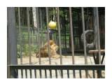 в зоопарке  Просмотров: 3363 Комментариев: