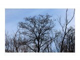 Причудливые деревья... Фотограф: vikirin  Просмотров: 581 Комментариев: 0