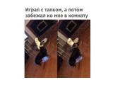 Название: :))) Фотоальбом: Живности. Пёсы Категория: Животные  Просмотров: 53 Комментариев: 0