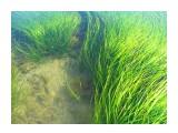 В зеленом лесу чилимы живут... Фотограф: vikirin  Просмотров: 4213 Комментариев: 2