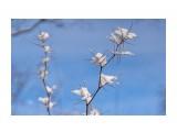 Название: _DSC5634 Фотоальбом: Зима... Категория: Природа Фотограф: VictorV  Время съемки/редактирования: 2020:12:18 20:32:43 Фотокамера: SONY - ILCA-77M2 Диафрагма: f/5.0 Выдержка: 1/5000 Фокусное расстояние: 1350/10    Просмотров: 83 Комментариев: 0
