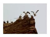Название: Из жизни чаек... Фотоальбом: ЧАЙКИ... Категория: Животные Фотограф: vikirin  Время съемки/редактирования: 2011:07:16 15:02:08 Фотокамера: Canon - Canon EOS Kiss X3 Диафрагма: f/10.0 Выдержка: 1/800 Фокусное расстояние: 250/1 Светочуствительность: 200   Просмотров: 1835 Комментариев: 0