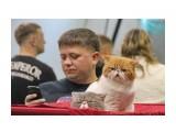 Название: Выставка Фотоальбом: выставка кошек Категория: Животные  Время съемки/редактирования: 2015:10:18 09:11:36 Фотокамера: Canon - Canon EOS 550D Диафрагма: f/5.6 Выдержка: 1/125 Фокусное расстояние: 135/1    Просмотров: 356 Комментариев: 0