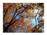 Осенний ветер  Просмотров: 2322 Комментариев: