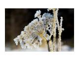 Даги зимние  IMG_6303   Просмотров: 68  Комментариев: 0