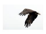 охотник Фотограф: ©  marka /печать больших фотографий,создание слайд-шоу на DVD/  Просмотров: 650 Комментариев: 0
