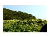 Заросли.. зелено то как.. лето это здорово Фотограф: vikirin  Просмотров: 1182 Комментариев: 0