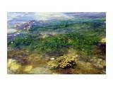 морская трава  Просмотров: 1537 Комментариев: 0