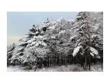 ЗИМА Фотограф: gadzila В зимнем парке  Просмотров: 2464 Комментариев: 0