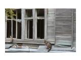 Название: Бездомная Фотоальбом: кошки Категория: Животные  Время съемки/редактирования: 2016:10:12 18:54:14 Фотокамера: Canon - Canon EOS 550D Диафрагма: f/5.6 Выдержка: 1/100 Фокусное расстояние: 57/1   Описание: Скоты люди, квартиры получили а кошек бросили.  Просмотров: 413 Комментариев: 0