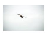 охотник Фотограф: ©  marka /печать больших фотографий,создание слайд-шоу на DVD/  Просмотров: 505 Комментариев: 0