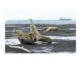 Татарский пролив. Невельск. Во время отлива. Фотограф: 7388PetVladVik  Просмотров: 1827 Комментариев: 0