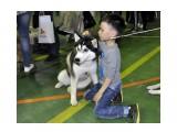 Название: Друзья Фотоальбом: собаки Категория: Животные  Время съемки/редактирования: 2017:06:12 18:48:50 Фотокамера: NIKON CORPORATION - NIKON D5000 Диафрагма: f/3.5 Выдержка: 10/600 Фокусное расстояние: 180/10    Просмотров: 283 Комментариев: 1