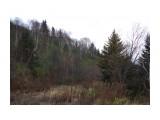 IMGP3124 Лесные дали. Лес, горы и дороги! Фотограф: viktorb  Просмотров: 1308 Комментариев: 0