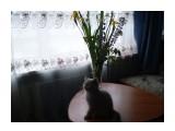 Название: P7090052 Фотоальбом: Кот Оксфорд Категория: Животные  Время съемки/редактирования: 2009:07:09 08:42:59 Фотокамера: OLYMPUS IMAGING CORP.   - FE210,X775 Диафрагма: f/3.1 Выдержка: 1/60 Фокусное расстояние: 630/100 Светочуствительность: 64   Просмотров: 621 Комментариев: 1