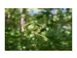 Название: DSC05792 Фотоальбом: Цветочки-ягодки  разные... Категория: Цветы Фотограф: VictorV  Время съемки/редактирования: 2020:08:09 20:40:38 Фотокамера: SONY - SLT-A99 Диафрагма: f/2.8 Выдержка: 1/800 Фокусное расстояние: 500/10    Просмотров: 9 Комментариев: 0