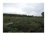 Истребление леса под биатлонный комплекс Работают по-воровски: без раскрежовки и вывозки - чтоб успеть уничтожить как можно больше, пока общественность не очухалась  Просмотров: 743 Комментариев: 0