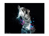 Название: Игра цветов ... Фотоальбом: Разное Категория: Разное Описание: Игра цветов ...  Просмотров: 722 Комментариев: 0