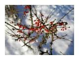 Цветы, деревья и травы  PC160078_н   Просмотров: 136  Комментариев: 0