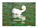 Название: DSC01678 Фотоальбом: Осень в зоопарке Категория: Животные  Просмотров: 62 Комментариев: 0