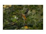 Название: :) Фотоальбом: Красота пернатая Категория: Природа  Время съемки/редактирования: 2021:10:15 18:12:07 Фотокамера: Canon - Canon EOS 6D Диафрагма: f/6.3 Выдержка: 1/1000 Фокусное расстояние: 500/1    Просмотров: 36 Комментариев: 0