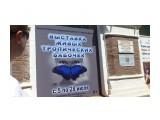 Благовещенск.На выставке бабочек Фотограф: vikirin  Просмотров: 1689 Комментариев: 0