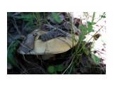 DSC09544 Фотограф: vikirin  Просмотров: 684 Комментариев: 0