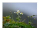Название: анемона Фотоальбом: флора Категория: Природа  Время съемки/редактирования: NIKON CORPORATION Фотокамера: 0 Диафрагма: f/74099632.0 Выдержка: 1111490560/-37748721 Фокусное расстояние: 1111490560/15    Просмотров: 144 Комментариев: 0