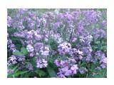 Полевые цветы Фотограф: tasya  Просмотров: 392 Комментариев: 0