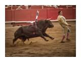 DSC00722_b_w800 Фотограф: © marka коррида, Испания, Барселона  Просмотров: 655 Комментариев: 0