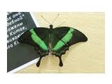 Благовещенск.На выставке бабочек Фотограф: vikirin  Просмотров: 1520 Комментариев: 0