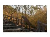 Дино на пути к Богу По пути наверх, встречаются разные животные, львы, жирафы, олени... Но, к чему там окровавленный динозавр, я не понял! Гений автора непостижим!  Просмотров: 904 Комментариев: