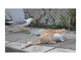 Название: воровка Фотоальбом: кошки Категория: Животные  Просмотров: 548 Комментариев: 0