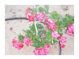 Название: DUBAI (254) Фотоальбом: DUBAI Категория: Цветы  Просмотров: 467 Комментариев: 0
